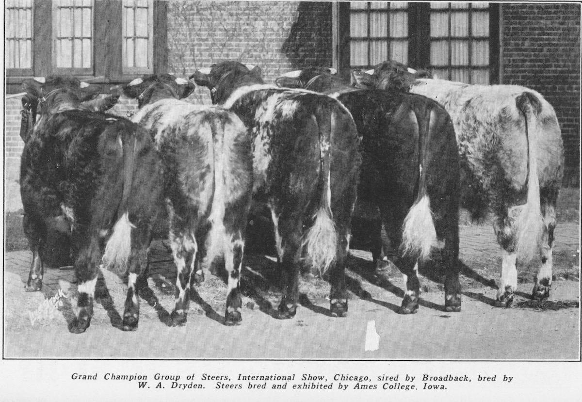 Internat. Show, Chicago 1927