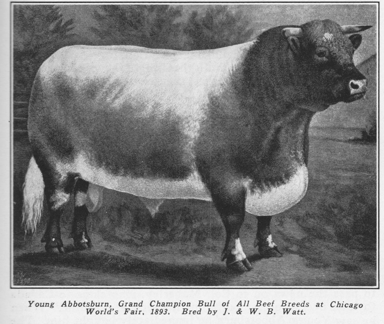 Young Abbotsburn, 1893