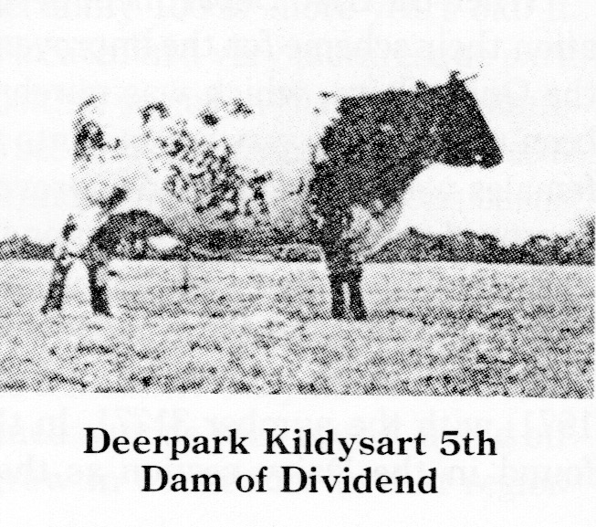Deerpark Kildysart 5th.jpeg
