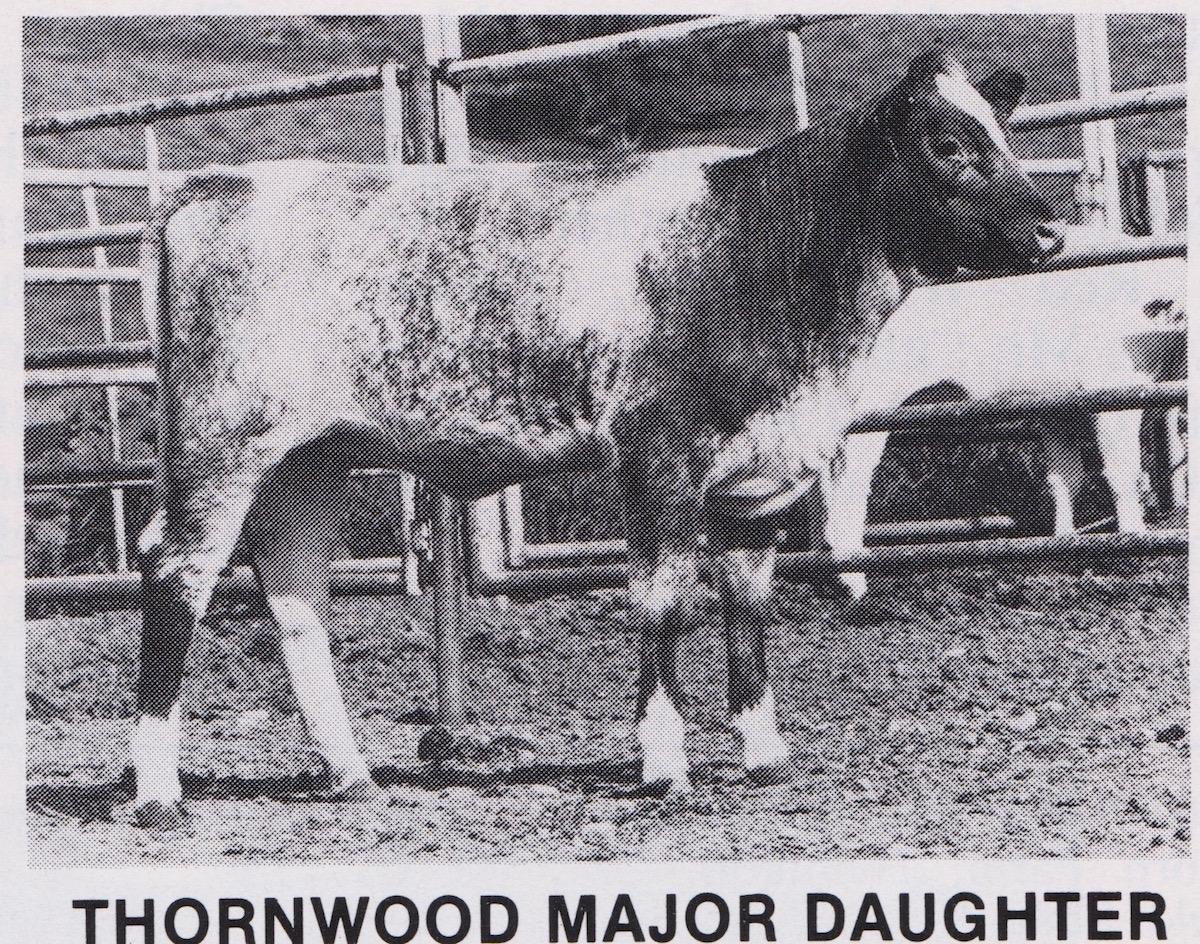 Daughter of Thornwood Major
