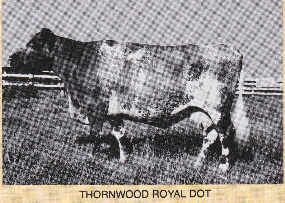 Thornwood Royal Dot, at 16 yrs.  Dam of Thornw. Royal Teri, Thornw. Major, and Abraham