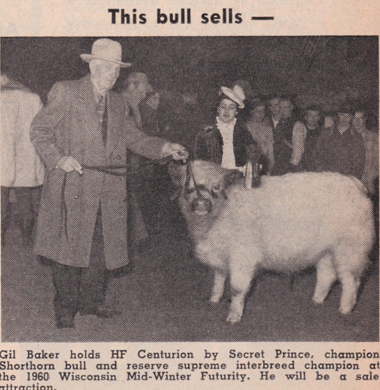 Champion White Bull, 1960
