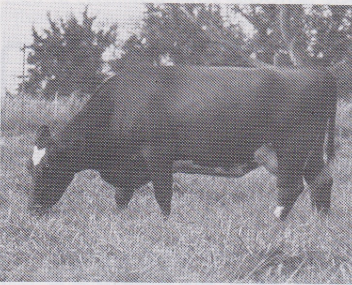 Miss Springfield, a Columbus daughter, and dam of Mr. Minot