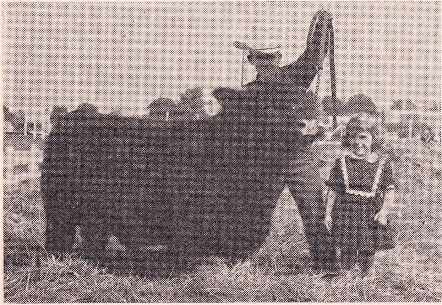 """Belt Buckle"" size Bull, 1960's"