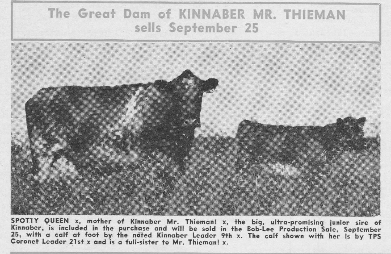 Spotty Queen, Dam of Kinnaber Mr. Thieman