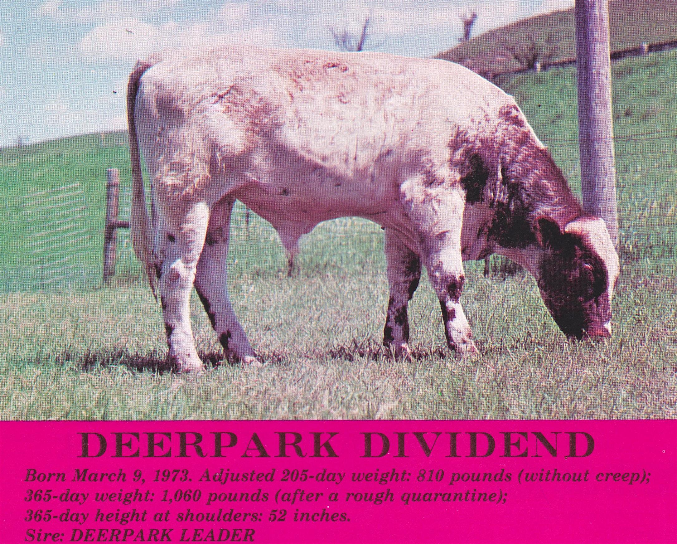 Deerpark Dividend