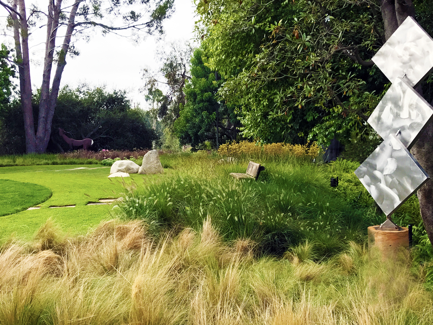 After: Mexican Feather Grass and 'Fairy Tails' feel more contemporary. Most of the thirsty turf is now Kurapia, a drought-tolerant turf substitute.