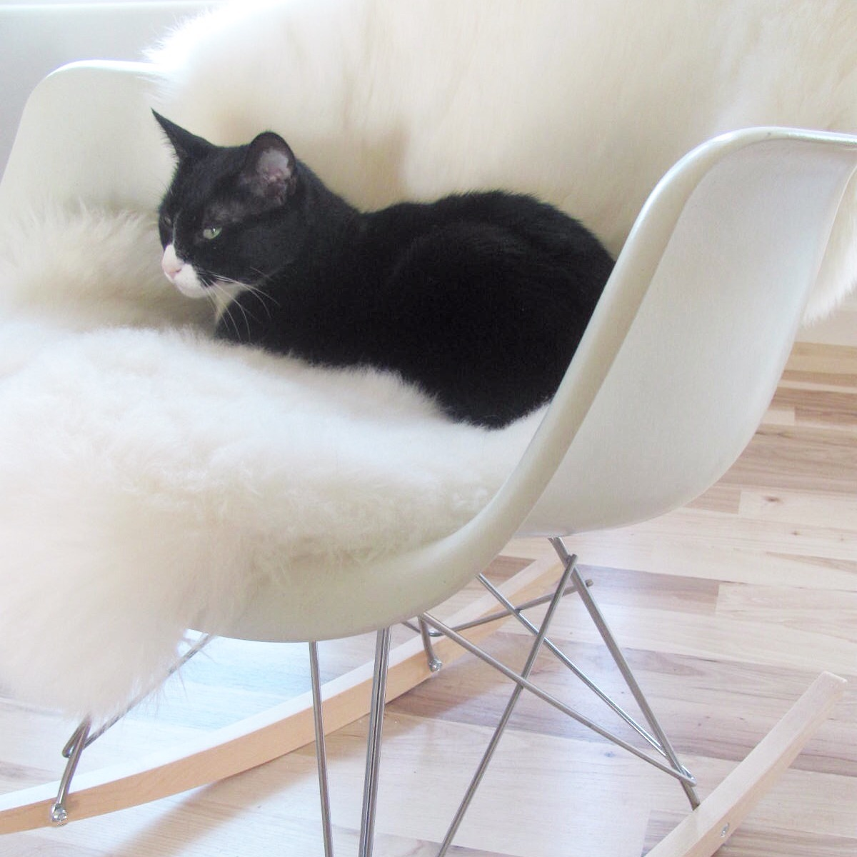 Miles lounging in style on sheepskin.