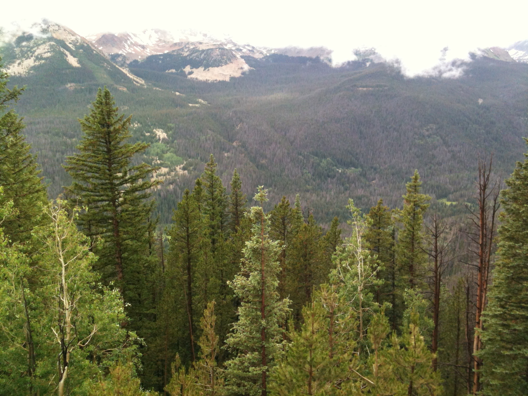 Rocky Mountain National Park. The brown swaths are signs of beetle kill destroying trees.