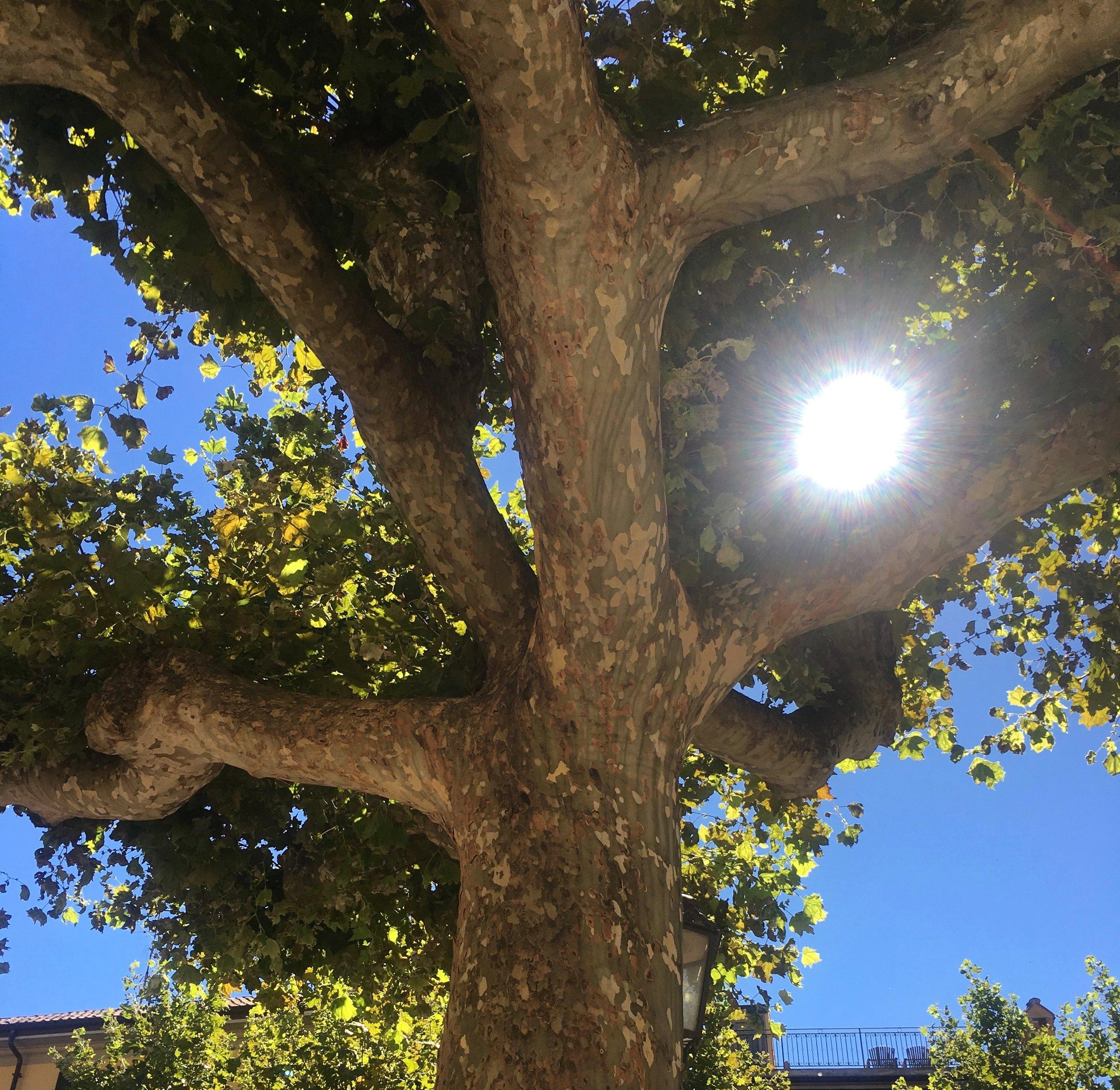 Sunlight filtering through the leaves in Varenna, Italy.