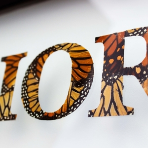 REAL BUTTERFLY TYPOGRAPHY
