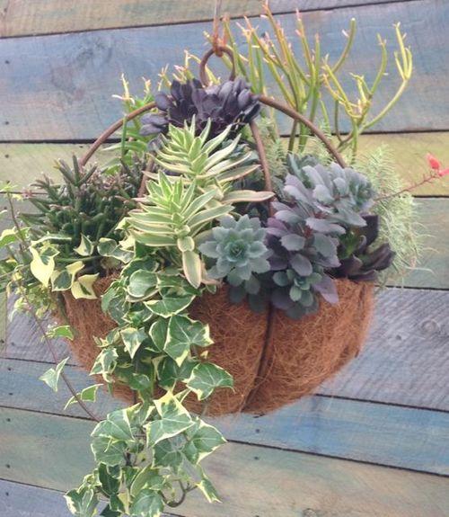 Succulent Sphere Hanging Basket Class