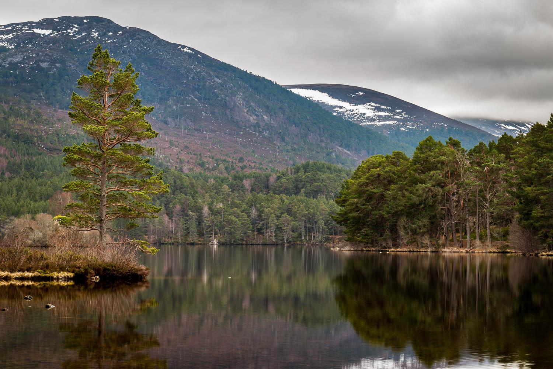 A lone Scots Pine on the shores of Loch an Eilein, Rothiemurchus Estate