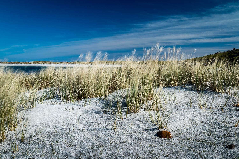 Marram Grass -Tràigh Bhalla, Vaul Bay.