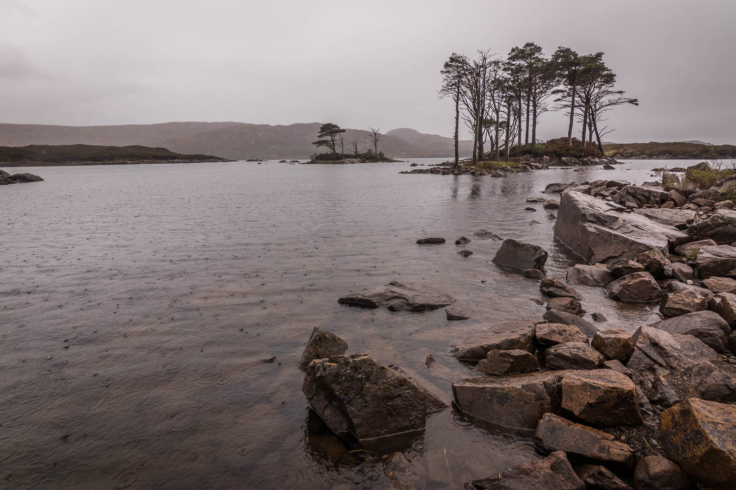 Caledonian Pines on Loch Assynt in the pouring rain.