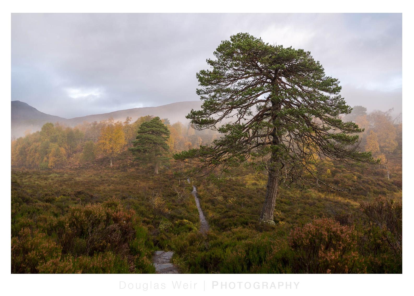 1710_Glen Affric - Oct 17_025.jpg