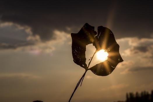 sun-heart-autumn-leaf-39379-medium.jpeg