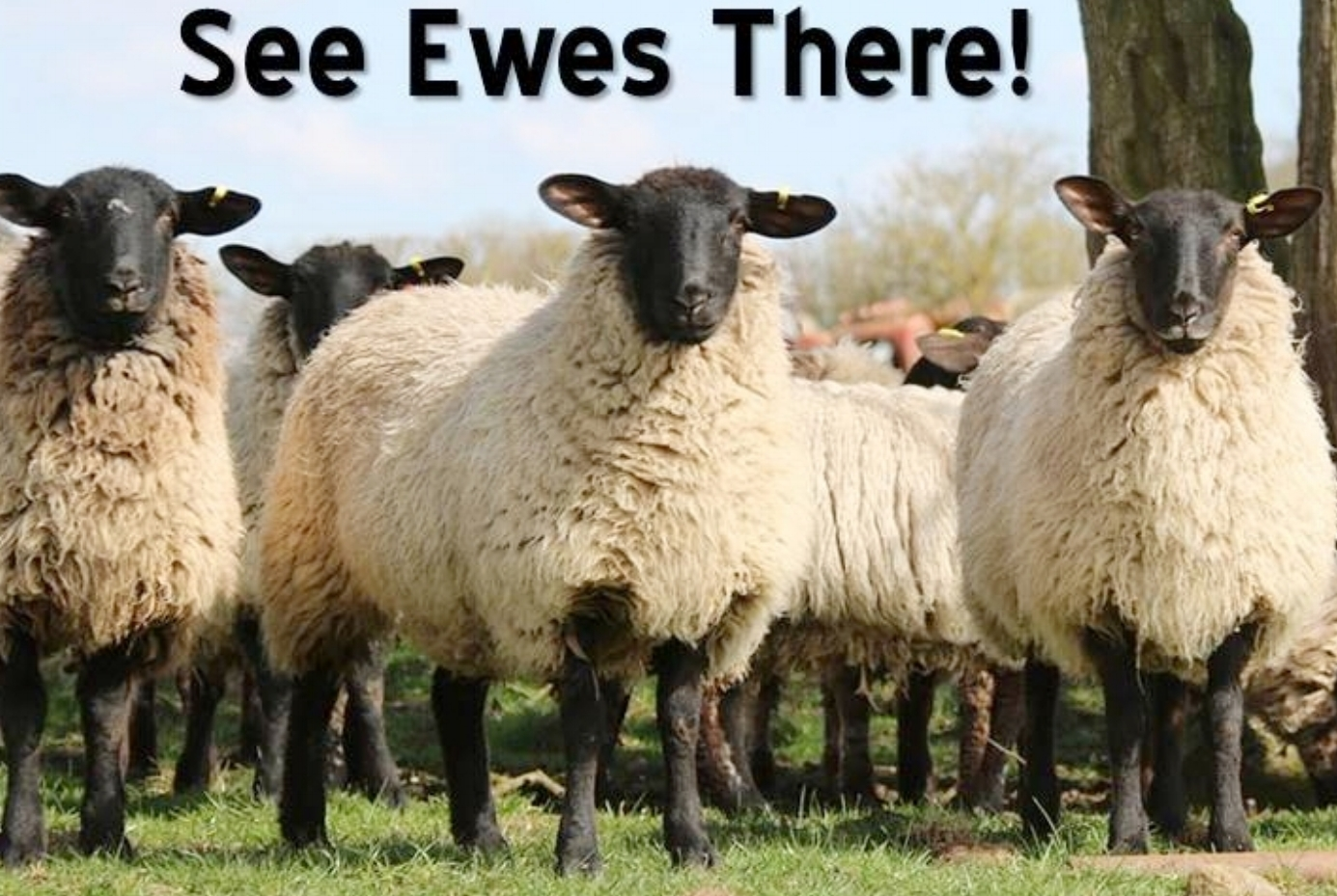 See Ewes There.jpg