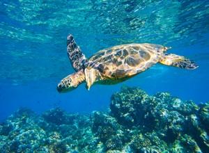 Explore Hawaii Properties