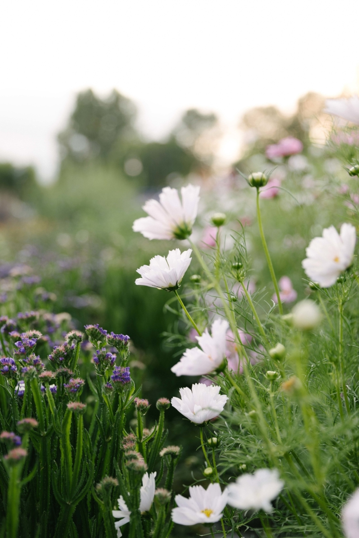 Jimena-Peck-Denver-Lifestyle-Editorial-Photographer-Native-Hill-Farm-Flowers-Nature