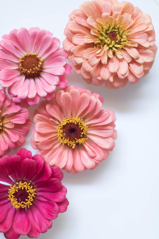 Jimena-Peck-Denver-Lifestyle-Editorial-Photographer-Native-Hill-Farm-Flowers-Pink