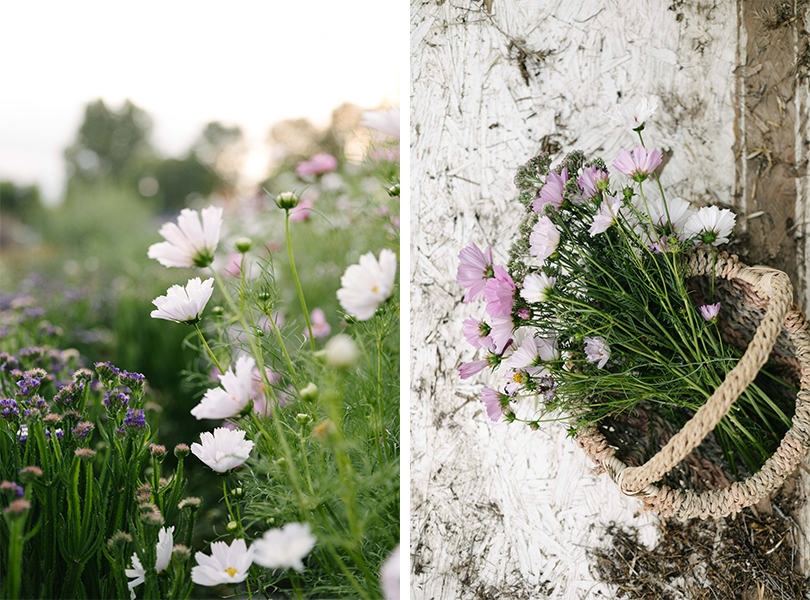 Jimena-Peck-Denver-Lifestyle-Editorial-Photographer-Native-Hill-Farm-Flowers-Basket