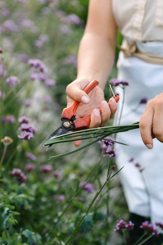 Jimena-Peck-Denver-Lifestyle-Editorial-Photographer-Native-Hill-Farm-Flowers-Scissors