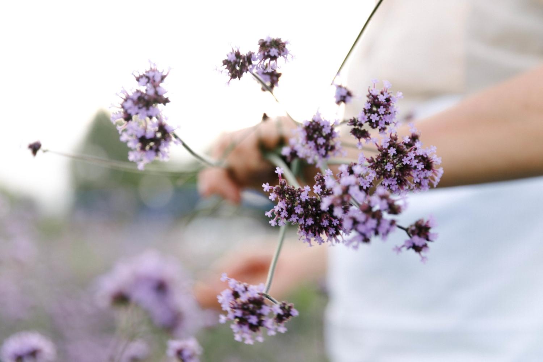 Jimena-Peck-Denver-Lifestyle-Editorial-Photographer-Native-Hill-Farm-Flowers-Grabbing