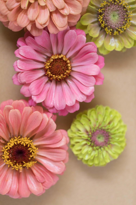 Jimena-Peck-Denver-Lifestyle-Editorial-Photographer-Native-Hill-Farm-Flowers-Closeup
