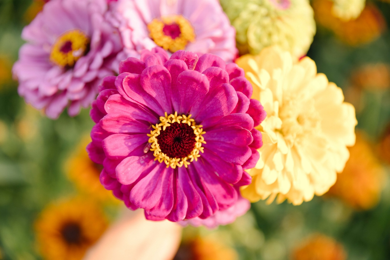 Jimena-Peck-Denver-Lifestyle-Editorial-Photographer-Native-Hill-Farm-Flowers-Foreground