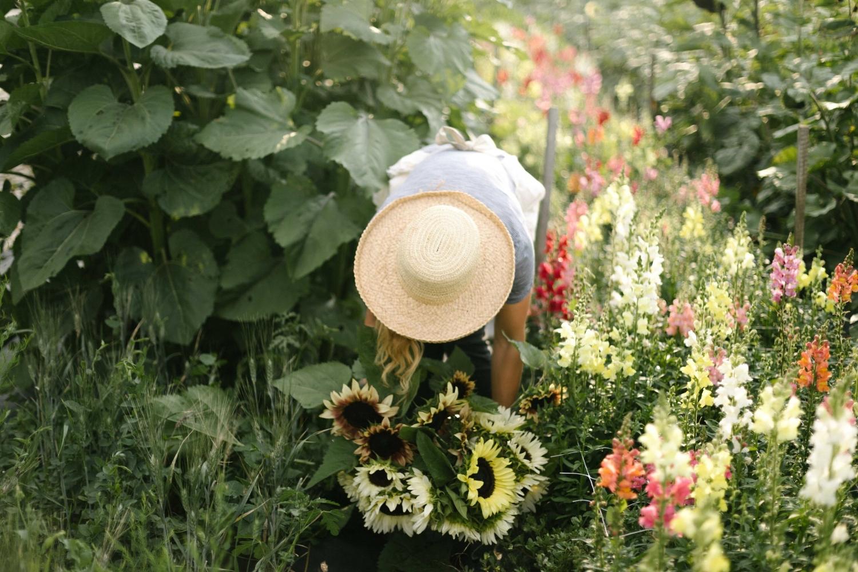 Jimena-Peck-Denver-Lifestyle-Editorial-Photographer-Native-Hill-Farm-Flowers-Sunflowers-Lupines
