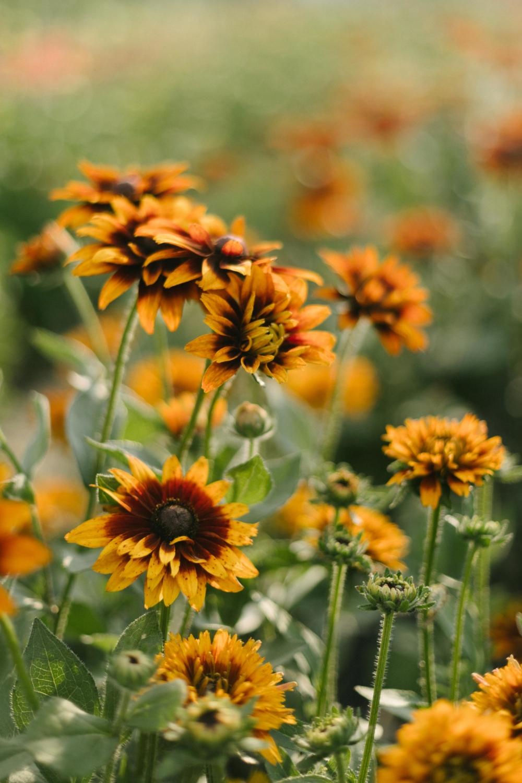 Jimena-Peck-Denver-Lifestyle-Editorial-Photographer-Native-Hill-Farm-Showy-Flowers