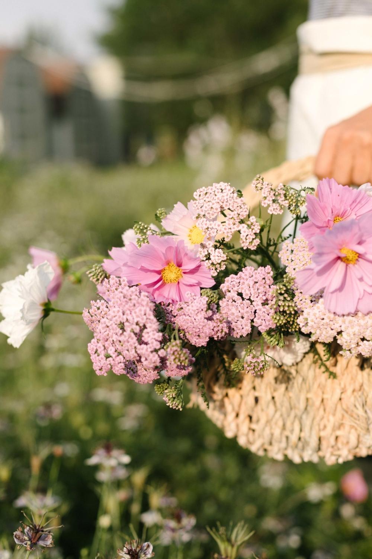 Jimena-Peck-Denver-Lifestyle-Editorial-Photographer-Native-Hill-Farm-Flowers-Pink-Spectrum