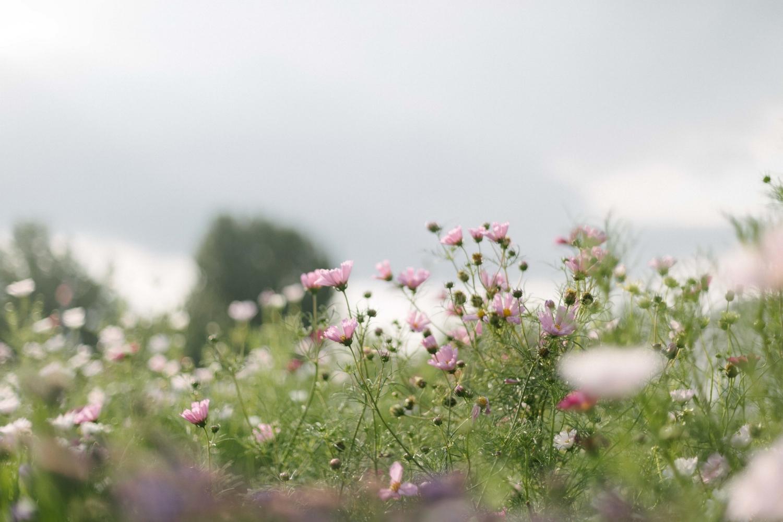 Jimena-Peck-Denver-Lifestyle-Editorial-Photographer-Native-Hill-Farm-Flowers-Landscape