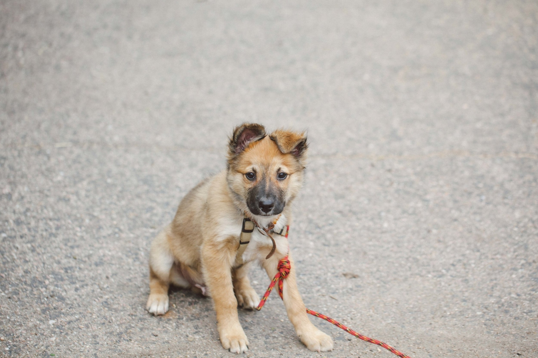 Jimena-Peck-Denver-Lifestyle-Editorial-Photographer-Colorado-Reclaim-Dog-Friendly