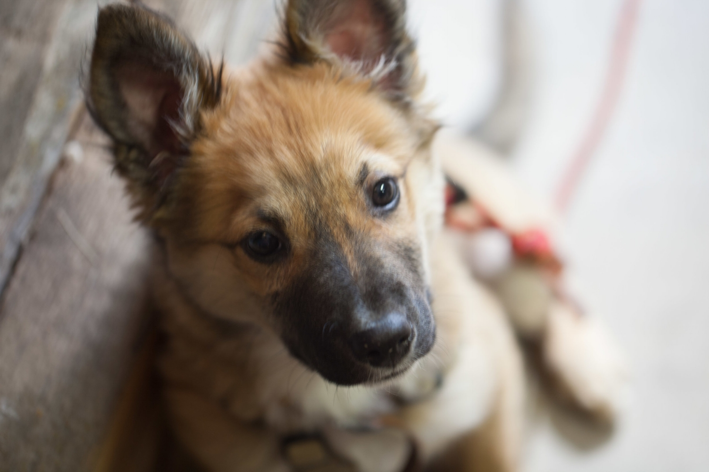 Jimena-Peck-Denver-Lifestyle-Editorial-Photographer-Colorado-Reclaim-Dog-Portrait