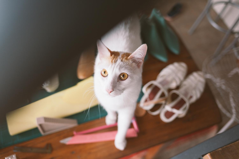 Jimena-Peck-Denver-Editorial-Commercial-Photographer-Makers-Firfina-Curious-Cat