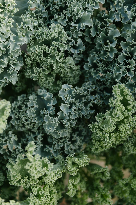 Jimena-Peck-Denver-Lifestyle-Editorial-Photographer-Native-Hill-Farm-The-Veggies-Kale