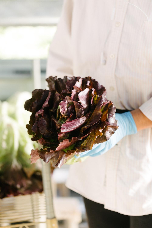 Jimena-Peck-Denver-Lifestyle-Editorial-Photographer-Native-Hill-Farm-The-Veggies-Gloves-Lettuce