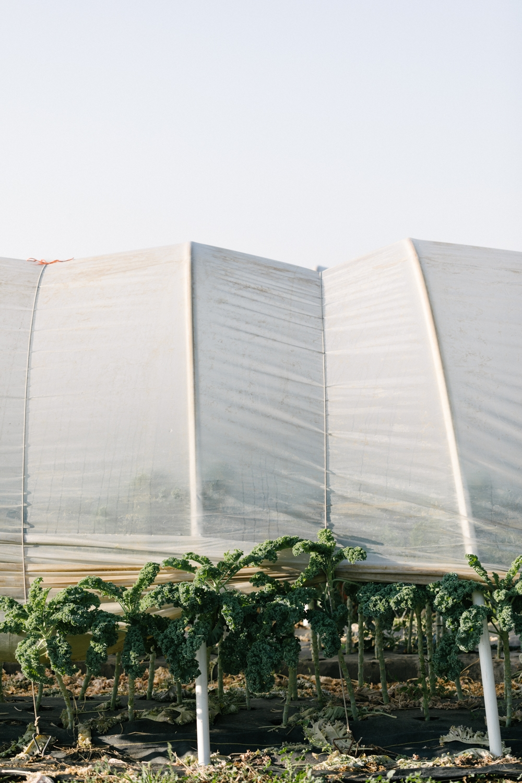 Jimena-Peck-Denver-Lifestyle-Editorial-Photographer-Native-Hill-Farm-The-Veggies-Greenhouse-Kale