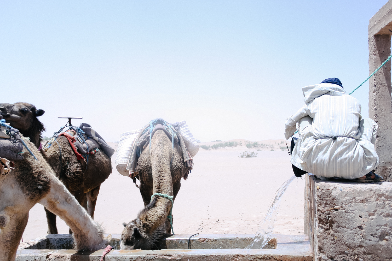 Jimena Peck Denver Lifestyle Editorial Photographer Camels