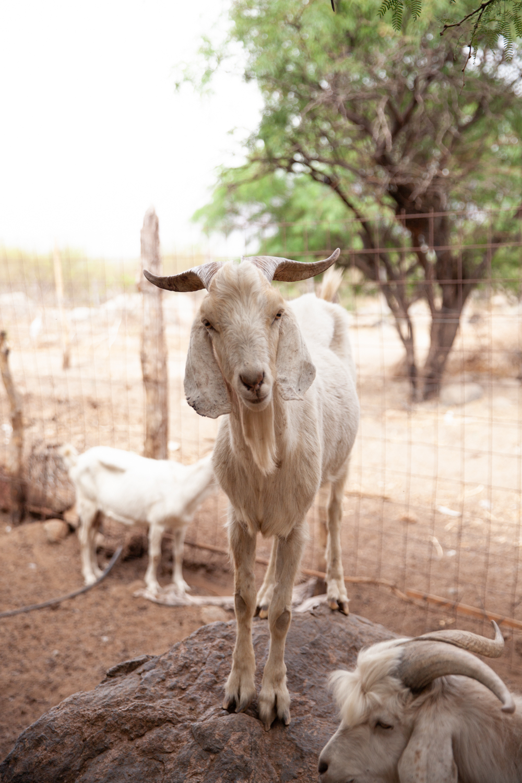 Jimena Peck Denver Lifestyle Editorial Photographer Curious Goat