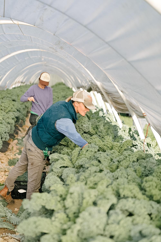 Jimena-Peck-Denver-Editorial-Commercial-Lifestye-Photographer-Farms-2.jpg