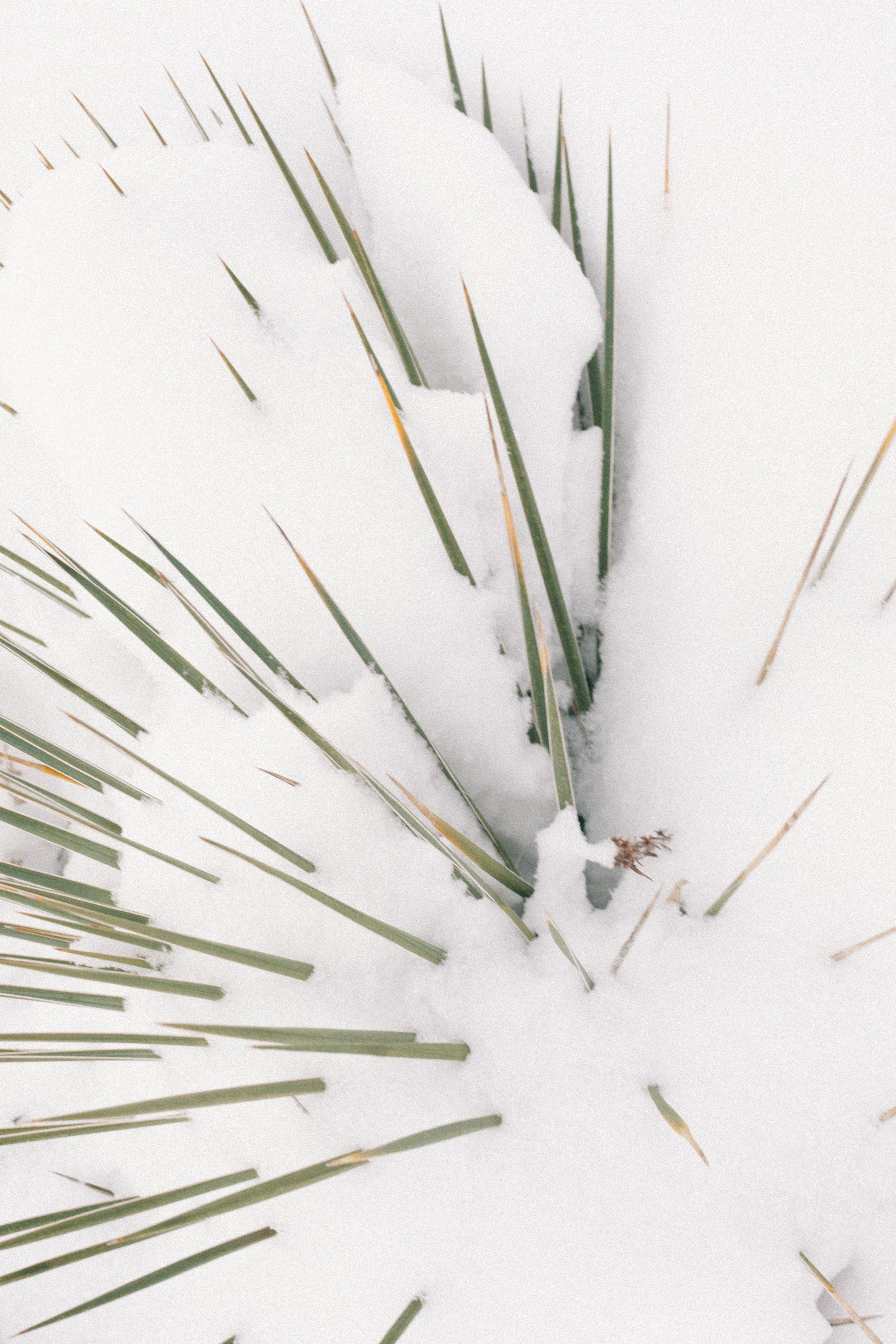 Jimena Peck Denver Lifestyle Editorial Photographer Pointy Plant In Winter