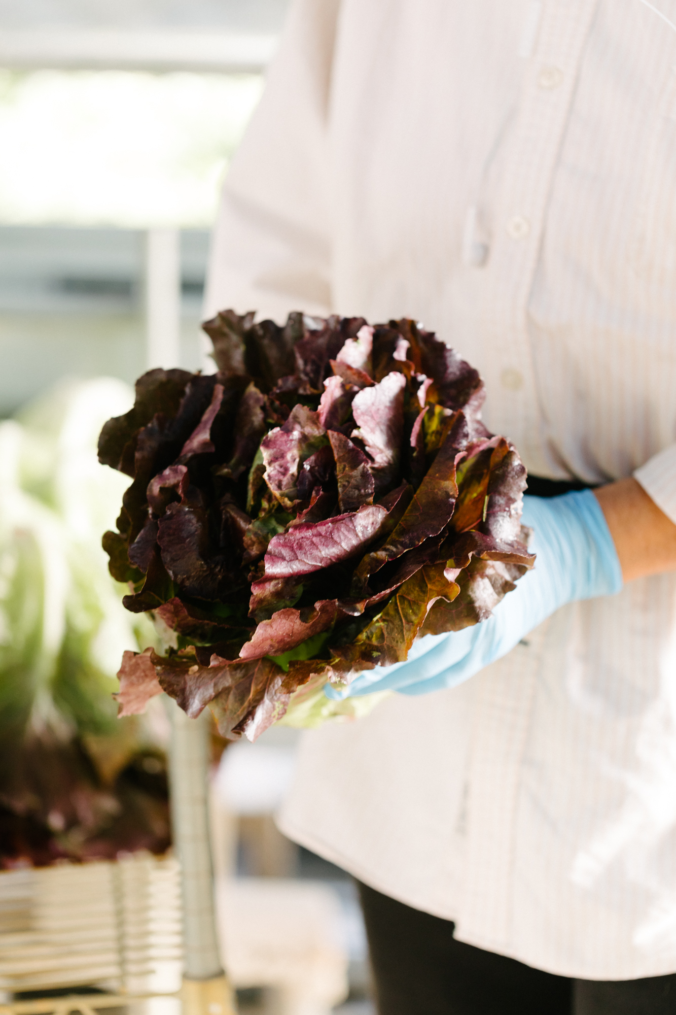Jimena Peck Denver Lifestyle Editorial Photographer Native Hill Farm Lettuce