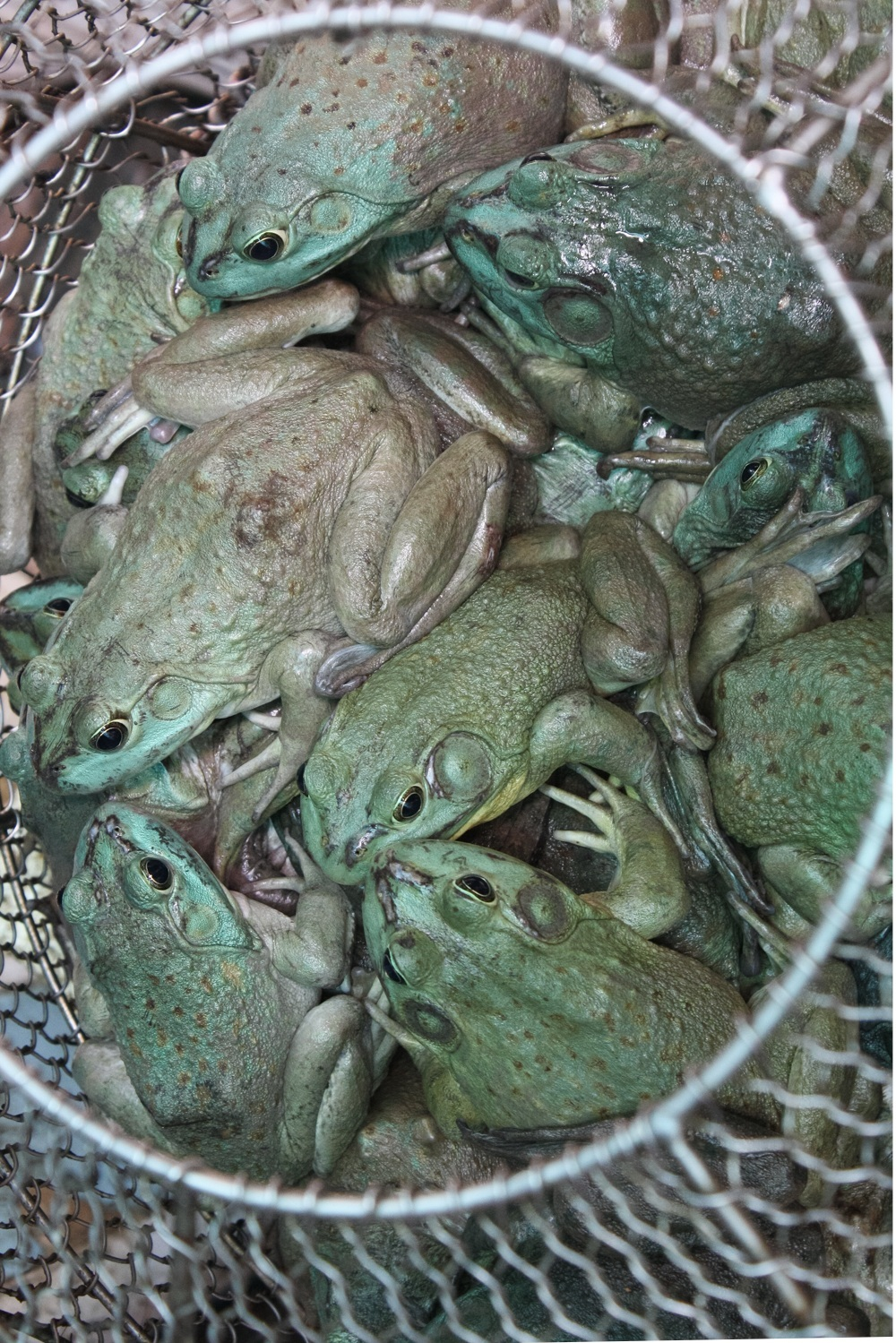 Jimena Peck Denver Lifestyle Editorial Photographer Frogs