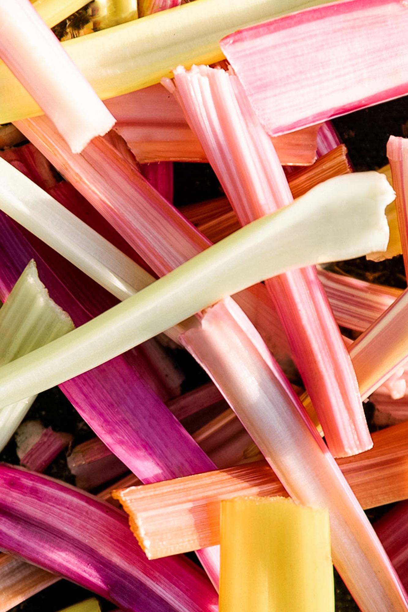 Jimena Peck Denver Lifestyle Editorial Photographer Native Hill Farm Colored Chard Stems