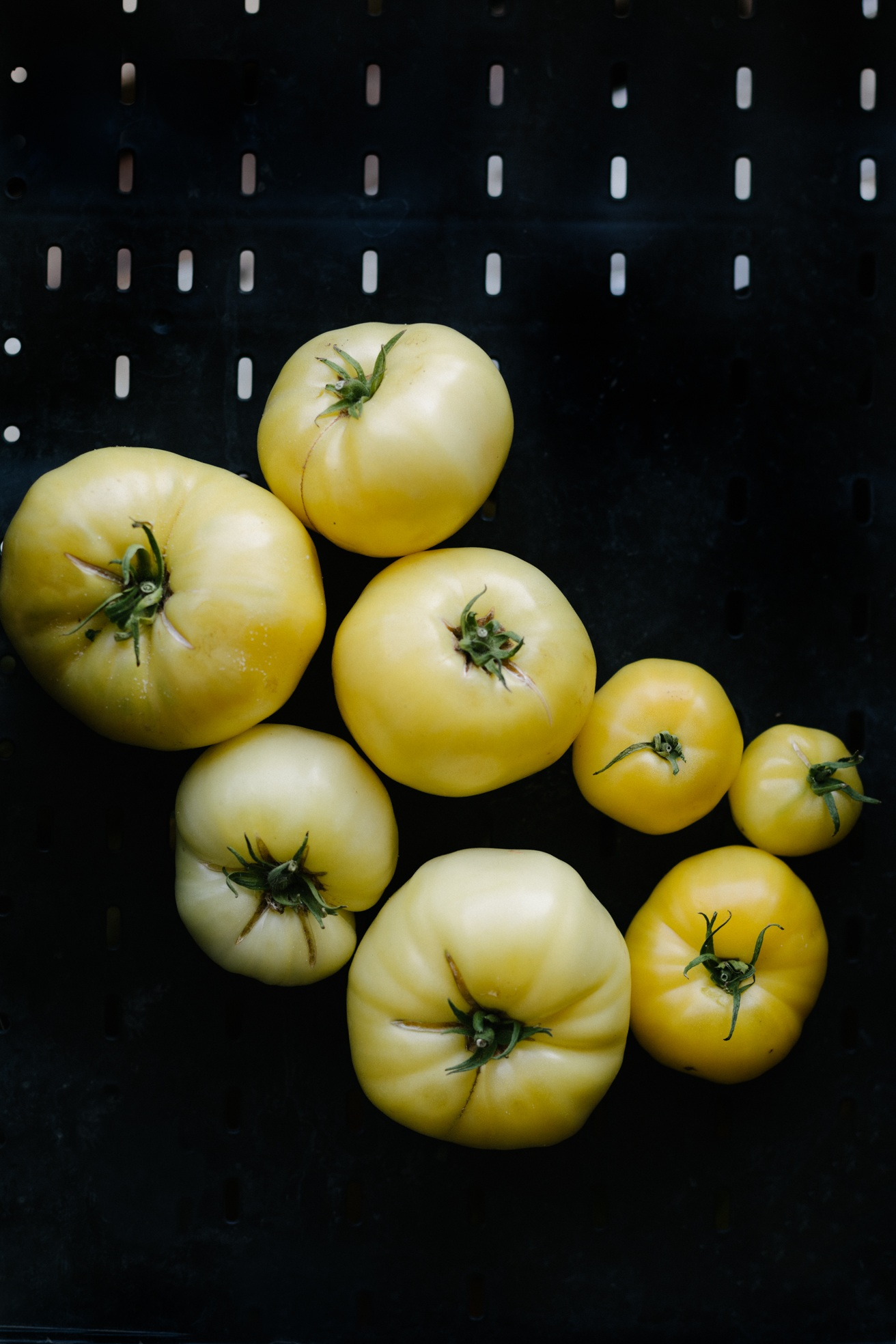 Jimena Peck Denver Lifestyle Food Photographer Yellow Tomatoes
