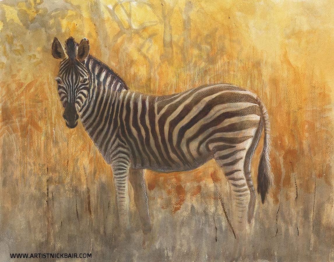 Morning Zebra - NFS