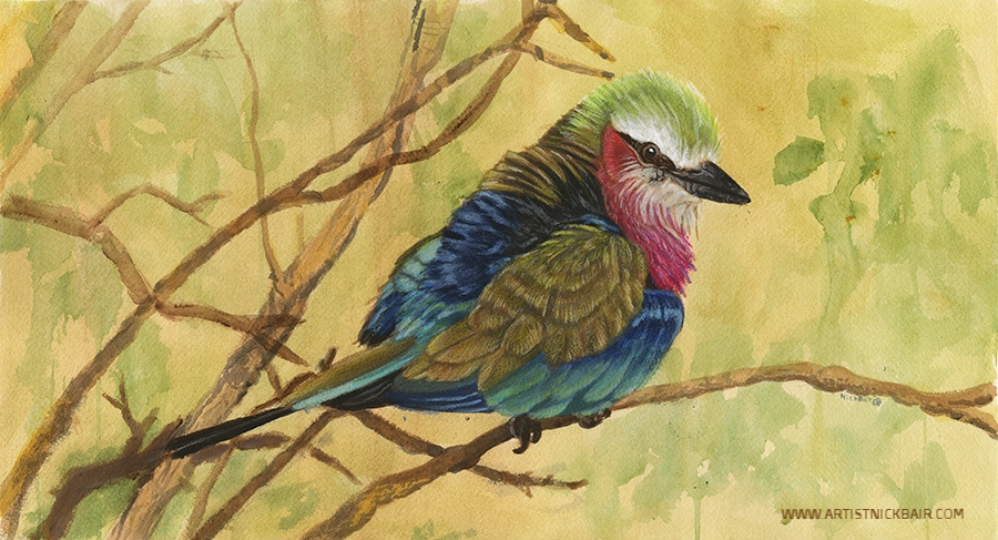 Lilac Breasted Roller - SOLD
